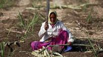 India's drought-stricken farmers plant thirstiest crop