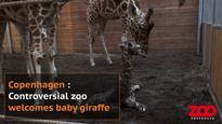 Copenhagen: Baby giraffe born in zoo that previously killed other giraffe