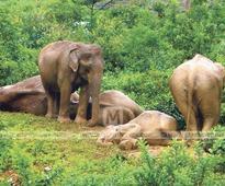 Wild elephants destroy 7 houses in Valparai