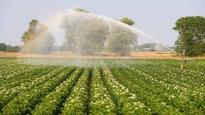 Potato growers urged to help with irrigation survey