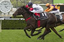 Yankee Rose Success Shared By Leading Studs