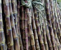 Govt hikes sugarcane FRP by Rs 25/qtl for 2017-18