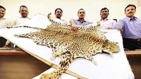 Two men get 3 year jail term for smuggling leopard skins