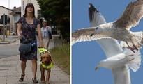 Blind woman left shaken after violent and 'evil' seagulls attack her and her guide dog