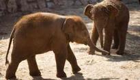 Man trampled to death by elephant in Chhattisgarh