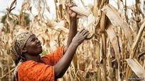 Smallholder Farmers in Africa to Benefit from reduction in Post Harvest Grain losses