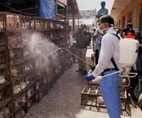 3 member committee to keep eye on outbreak of Bird flu