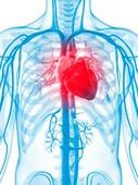 U of A a partner in research that could lead to preventing heart disease