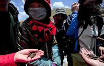 Nepal villager killed in fight over 'Himalayan Viagra'