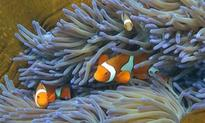 The government's report on the Great Barrier Reef is a 'dog ate my homework' moment