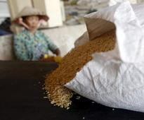 As Asia's rice crop shrivels, food security fears resurface