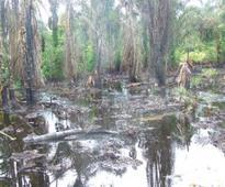 Ogoni Clean-up: Gazette UNEP Report Implementation, Activists Urge FG