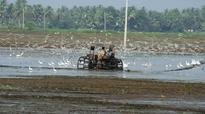 Njaattu pattu to echo in paddy fields of Rani Kayal