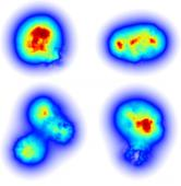 Scientists model the flicker of gluons in subatomic smashups