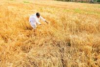 Government denied minimum support price to crops: INLD