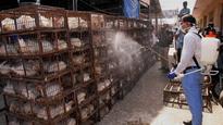 Delhi bird flu: SC raps AAP govt, asks MLAs to clean Delhi garbage