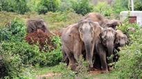 MoEF panel clears coal mine in Chhattisgarh elephant corridor