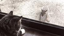 Squirrel gets up close and personal with house cat