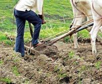 Provide solutions to agricultural -problems: PAU VC to scientists