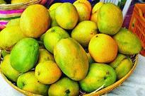 Mango Development Centre planned in Chintamani