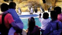 Penguins, selfie points are main attractions at Byculla Zoo this year