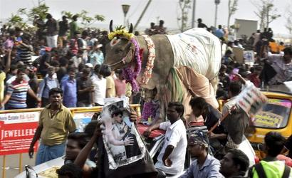 Why the BJP has a stake in Jallikattu's revival