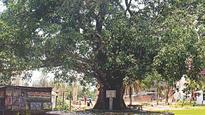 Trishal still bears memories of Nazrul