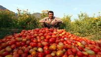 Amid Tomato crisis, buying tomatoes at 'Rs. 10 per kg is like a dream come true for people'