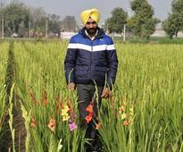 Futuristic farmers: Flowering mini-Holland in Punjab