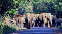 Odisha to deploy horses to drive away elephants, from Jharkhand and Bengal, raiding its villages