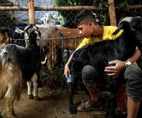 KMC monitoring goats, sheep kept for sale