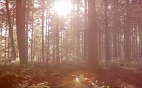 Northern Forest of 50 million trees to be planted between Liverpool and Hull