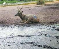 Deer park in Hill Palace Museum to be shifted to Thekkady