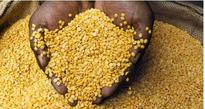 Centre gives 10,000 tonnes of pulses to four States as prices skyrocket