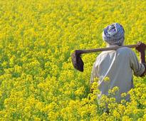 Biotech, the answer to edible oil shortage