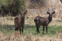 KWS conducts first herbivores census