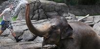 Elephants beat the heat