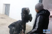 Survival tips for animals in freezing cold Jilin