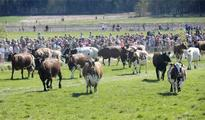 Viikki cattle start using summer pasture
