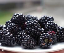 Benefits Of Having Blackberries During Pregnancy Period