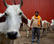 Gau rakshaks and ID cards: An official way to condone horrors unleashed by cow protectors?