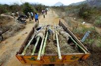 'Smugglers' fell sandalwood trees