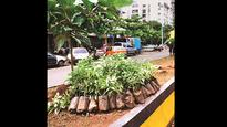 Maharashtra: Government to give 'tree credits' as an incentive for planting trees