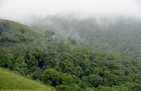 Environment Ministry withdraws draft forest policy