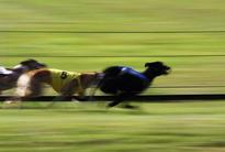 Hennessy and Holland set to dominate St Leger semi-finals