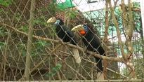 Nagaland Zoological Park emerging as biodiversity hotspot