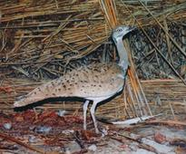 British Ambassador to Uzbekistan visits the Houbara project