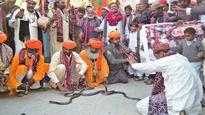 Snake charmers enthralled Sukkur on Jogi community's 'culture day'