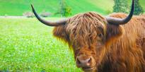 Woman stopped at border with yak meat and Mongolian cheese