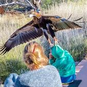 Eagle captured trying to carry off Australian boy during live show